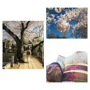 kimono2015.jpg